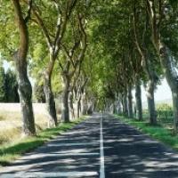Tree-lined roads