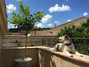 Terrasse privée avec vue sur le jardin et les toits en terre cuite